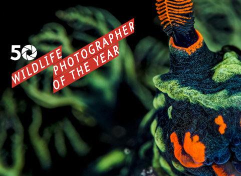 Natuur op zijn best – fototentoonstelling WPY