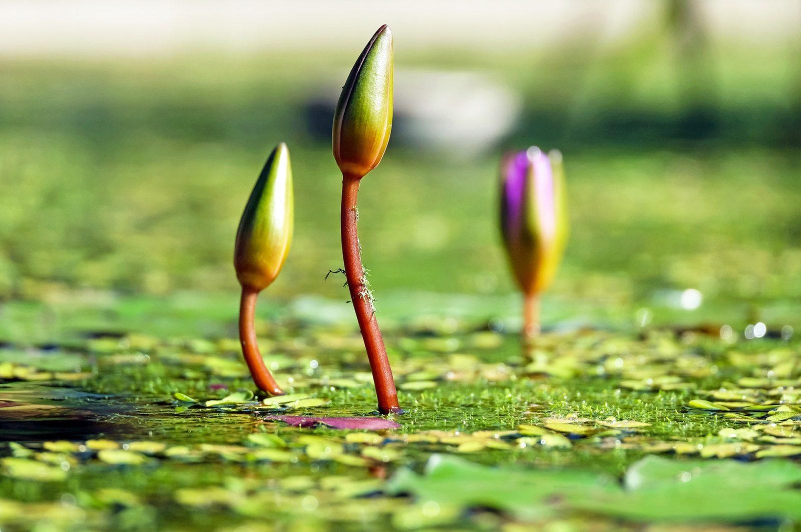 Bijzondere planten op de Kwekerijdagen Bingerden