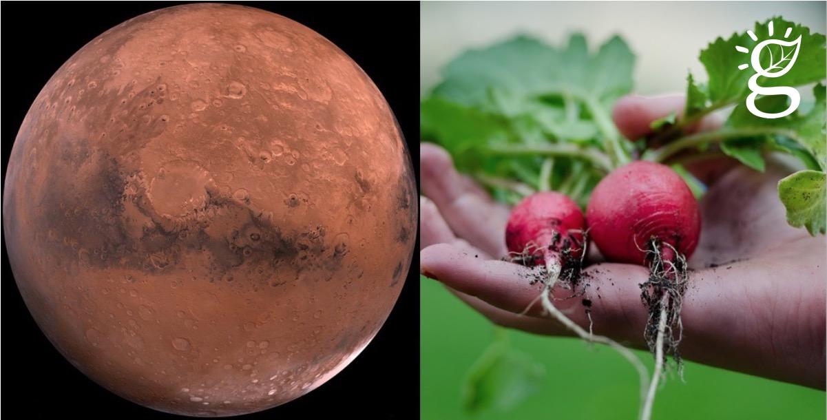 Moestuintje op Mars? Het kan!