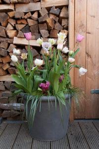 Lasagnebeplanting: klaar! Tulpen