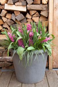 Lasagnebeplanting: Klaar! Hyacinthen