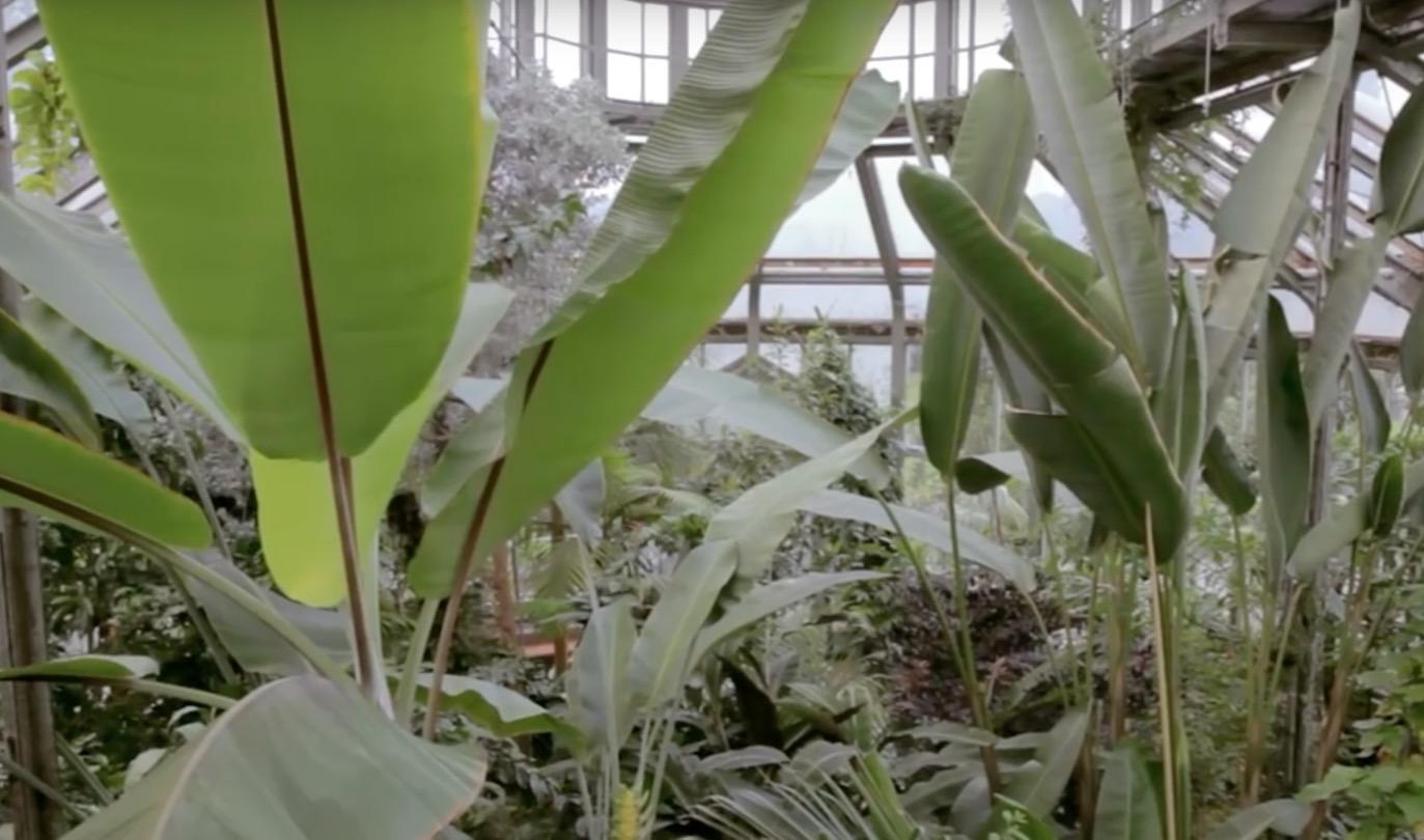 Exposé #08: hortus botanicus Berlijn