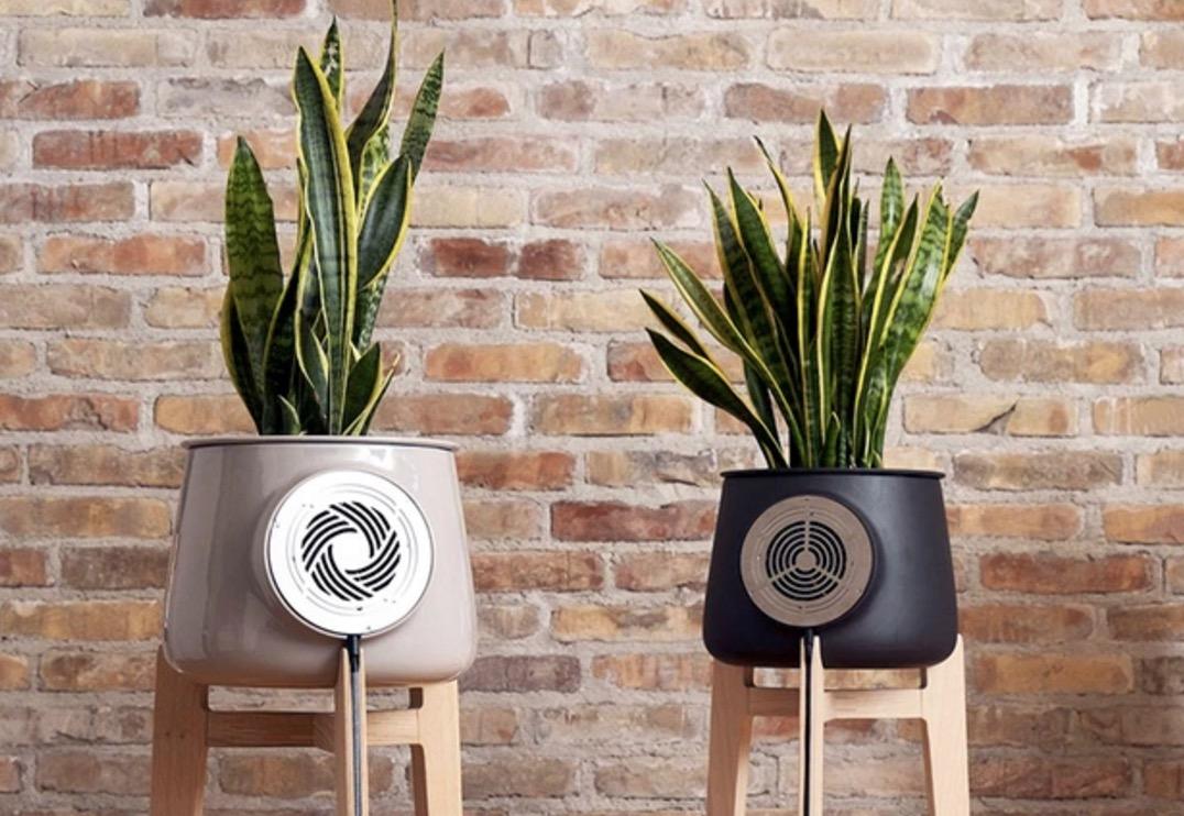 Een plantenpot die de lucht in je kamer zuivert
