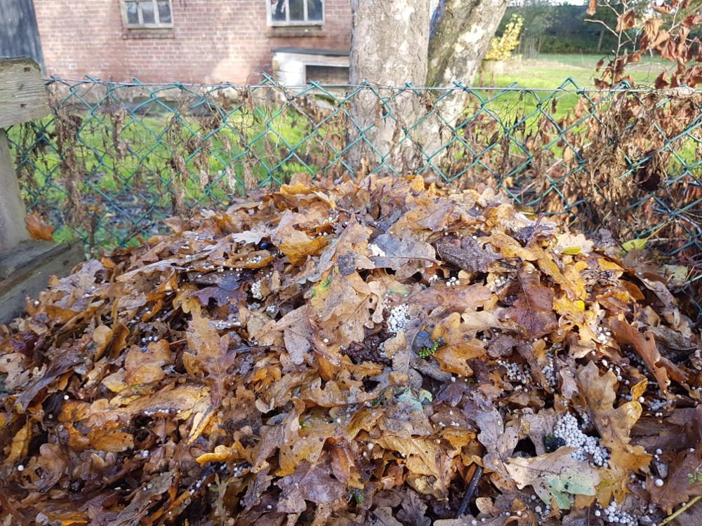 blad gemengd met kalk om bladcompost te maken