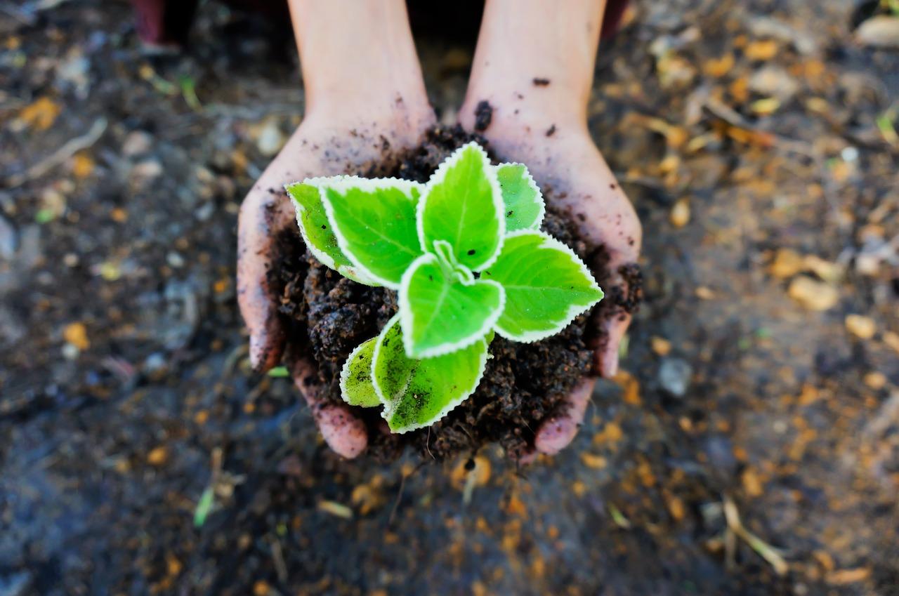 Planten aanraken
