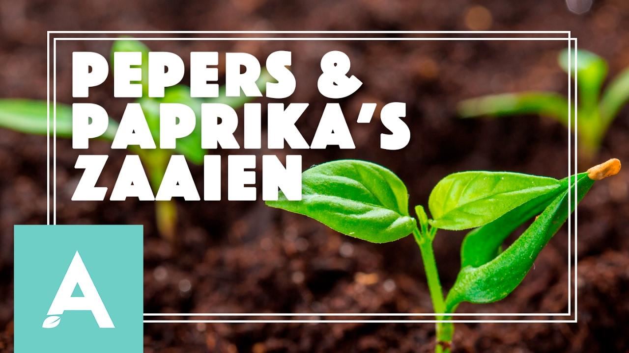 Pepers en paprika's zaaien! – Grow, Cook, Eat #3