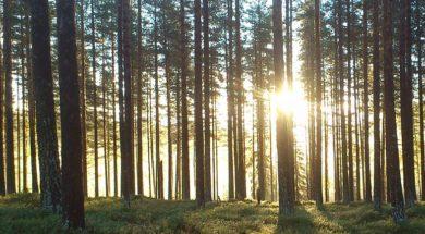 Oud bos ontdekt
