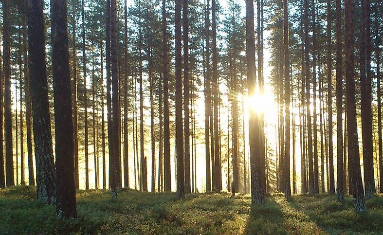 Unieke vondst: 13.000 jaar oud bos bij Leusden!