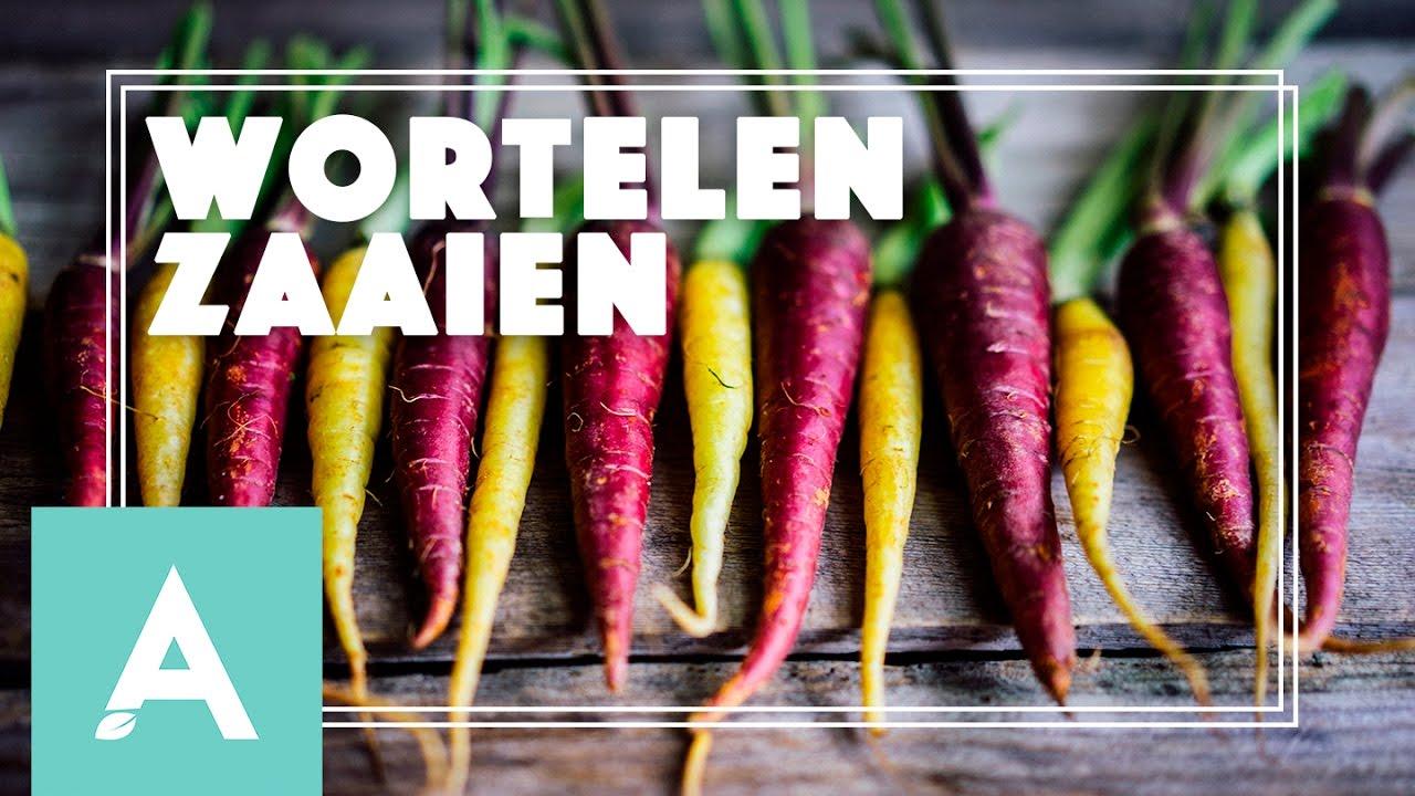 Wortelen zaaien! – Grow, Cook, Eat! #17