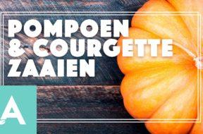 Pompoen en Courgette zaaien – Angelo