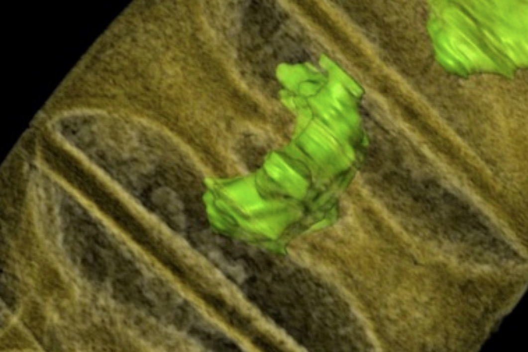 """""""Sushi van 1,6 miljard jaar oude algen"""""""