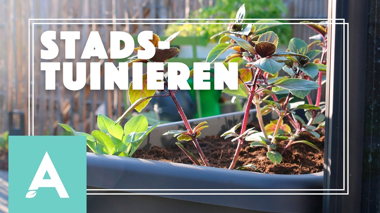 Moestuinieren in de stad! – Grow, Cook, Eat #13