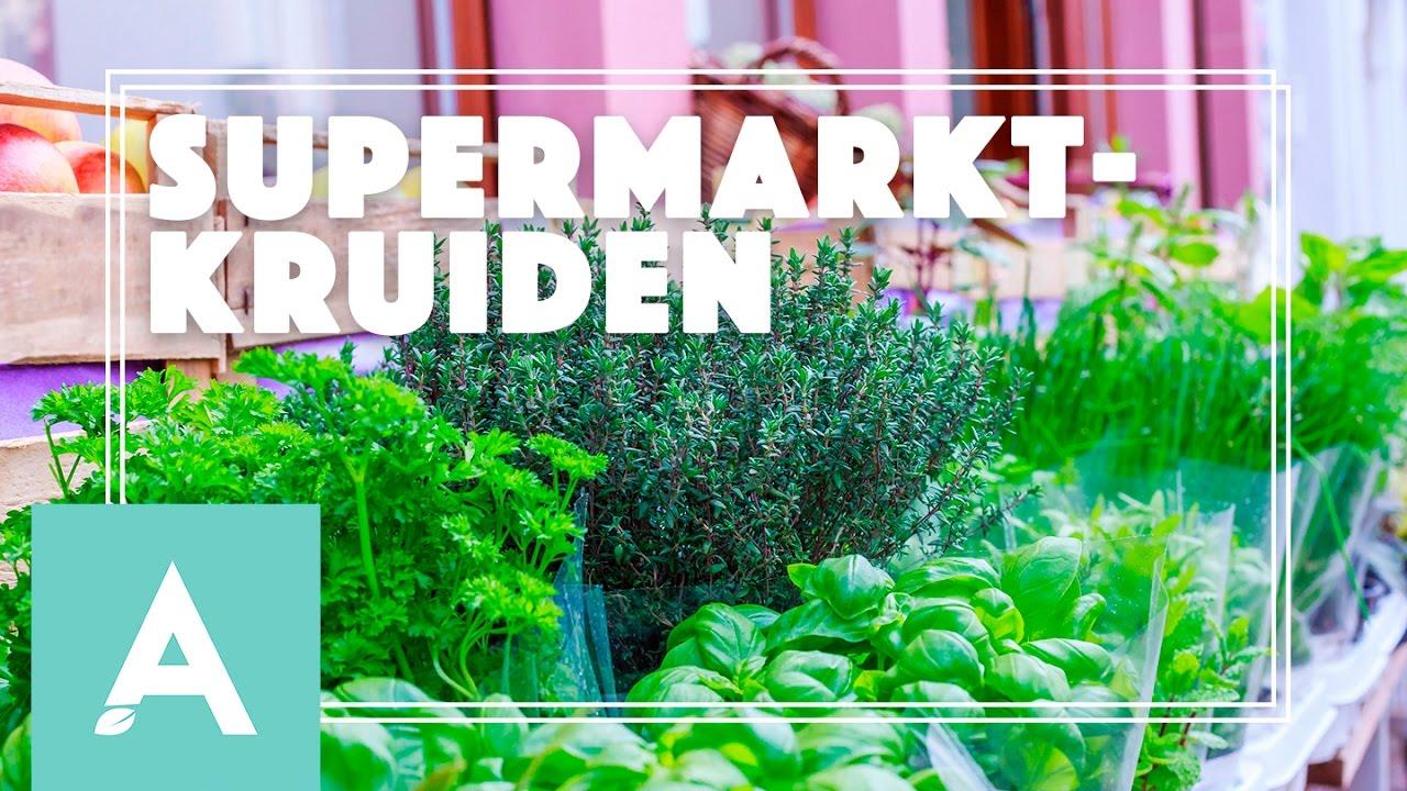 Hoe houd je supermarktkruiden in leven? – Grow, Cook, Eat #23