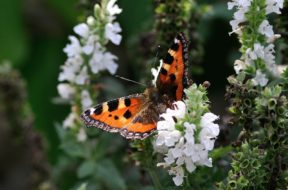 butterfly-199115_1280