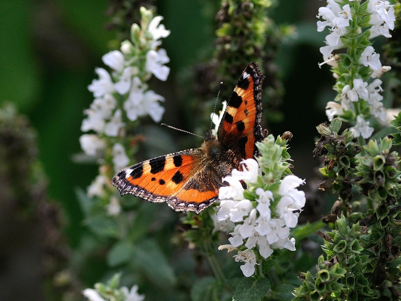 5 vlinderplanten bomvol nectar
