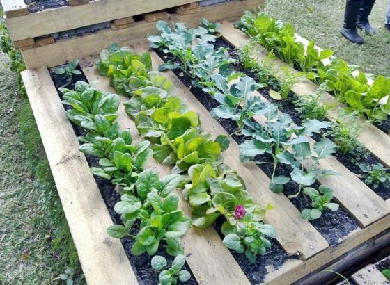 Tuinieren met pallets: goedkoop, makkelijk en duurzaam