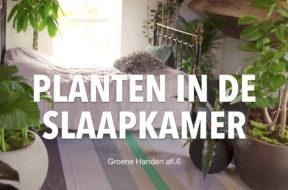 Groene Handen thumbnails YT.001
