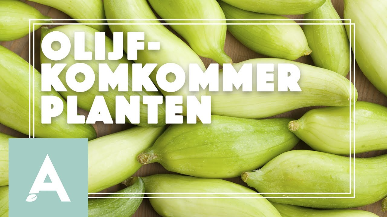 Olijfkomkommer planten! – Grow, Cook, Eat #32