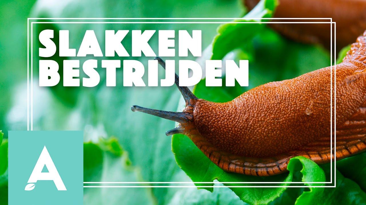 Slakken in de moestuin bestrijden! – Grow, Cook, Eat #24
