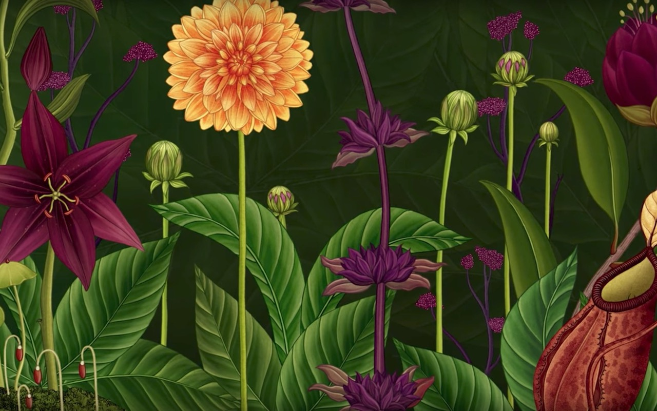 Prachtige animatie: The Story of Flowers