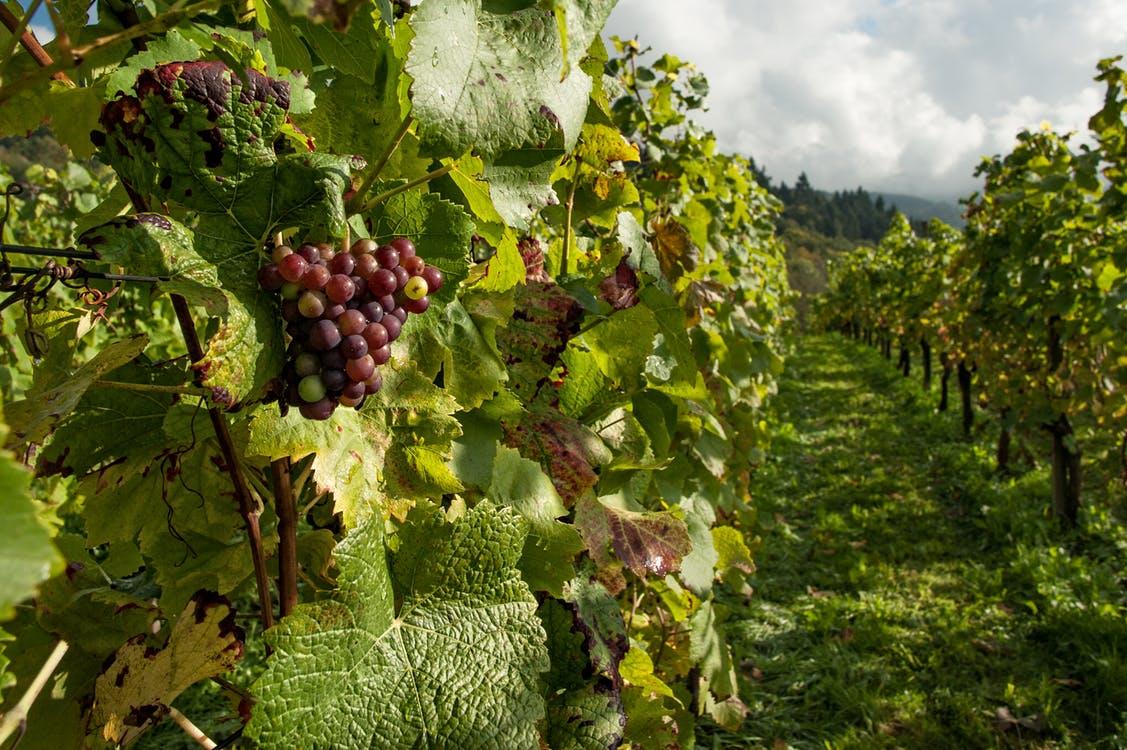 Fruit, zomerbloemen en wijn duur dit jaar door nachtvorst?