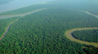 Aerial_view_of_the_Amazon_Rainforest