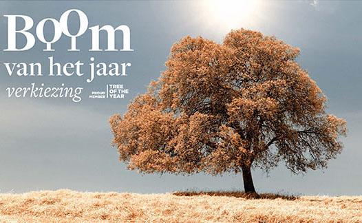 Nomineer een boom als Europese Tree of the Year!