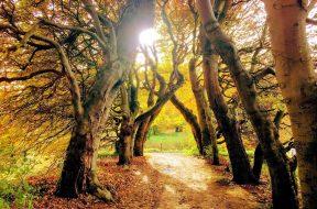 Bomen met een hartslag