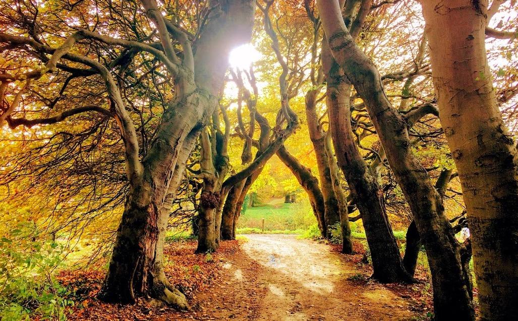 Bomen lijken een 'hartslag' te hebben