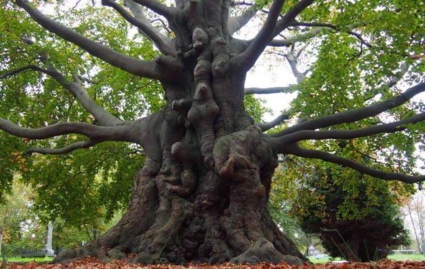 Dit zijn de vijf meest bijzondere bomen van Zuid-Holland