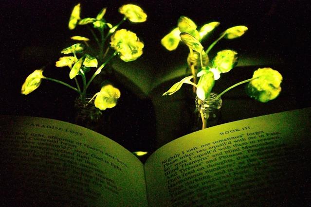 Glow in the dark: Wetenschappers maken planten die licht geven!