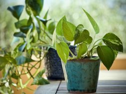 plants-3816945_960_720
