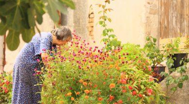 sea_of_flowers_old_lady_garden_plants_flowers_flower_fullness_bl_tenmeer_summer_the_wayside-1004819