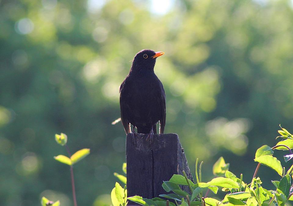 Waar zijn onze tuinvogels?