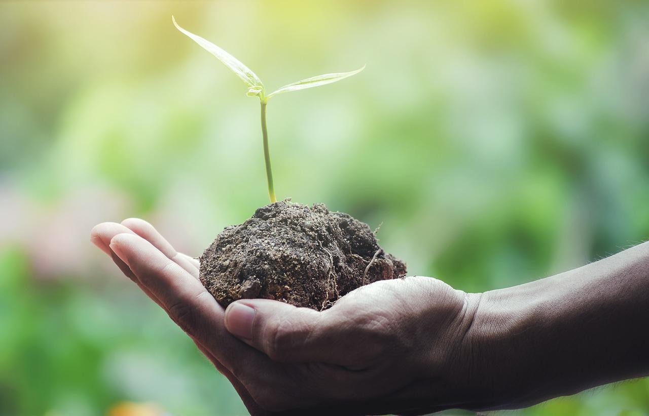 'Verplicht tien bomen planten voor een diploma'